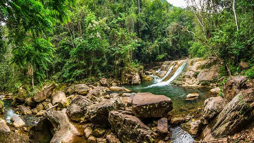 Central Peruvian jungle