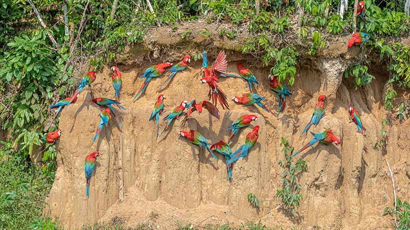 Southern Peruvian jungle