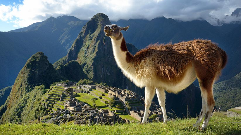 animals of peru