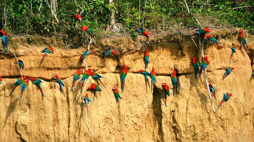 nature reserves in peru manu national park