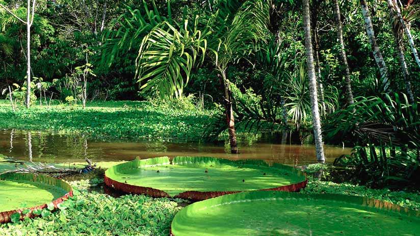nature reserves in peru tambopata