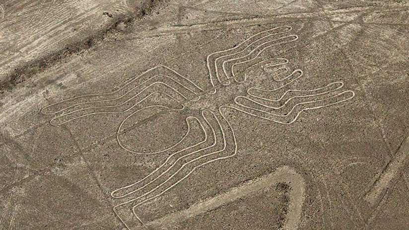 nazca lines images spider