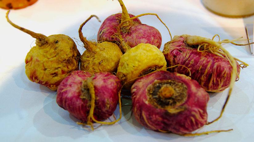 peruvian superfoods maca