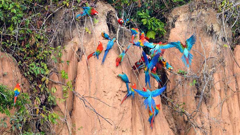 biodiversity in Peru bird observation