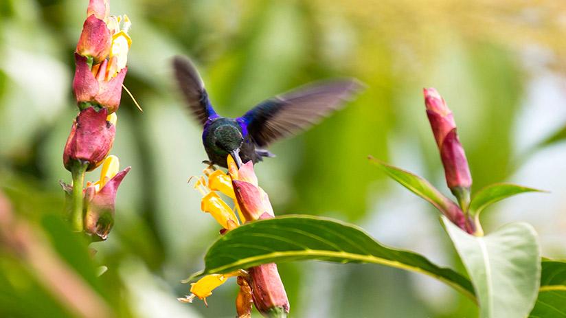 biodiversity in Peru flora fauna