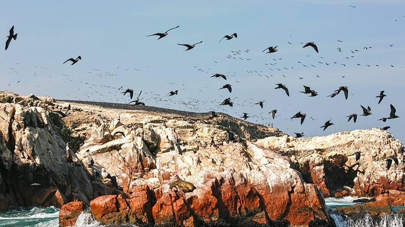 biodiversity in Peru marine biodiversity