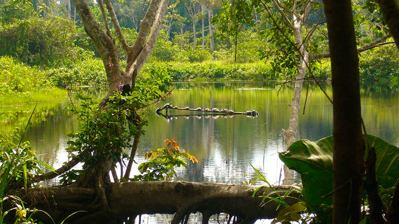 biodiversity in Peru terrestrial biodiversity