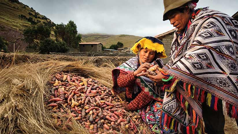 biodiversity in Peru