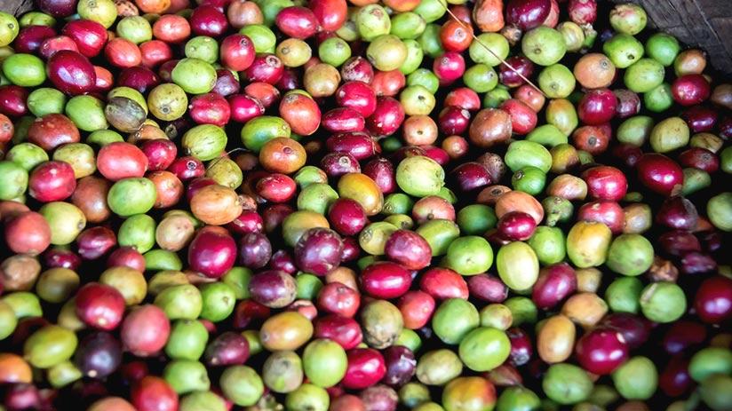 peruvian coffee characteristics