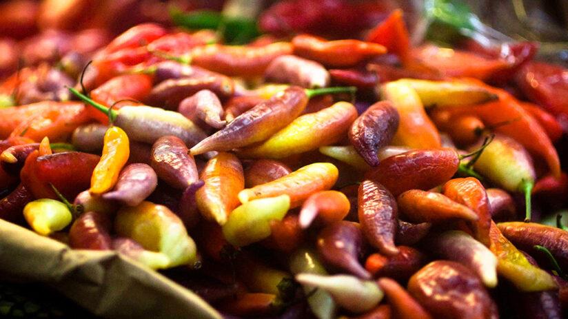peruvian gastronomy and its wonderful aji