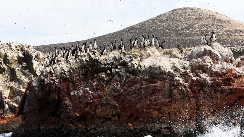 ballestas islands views in peru