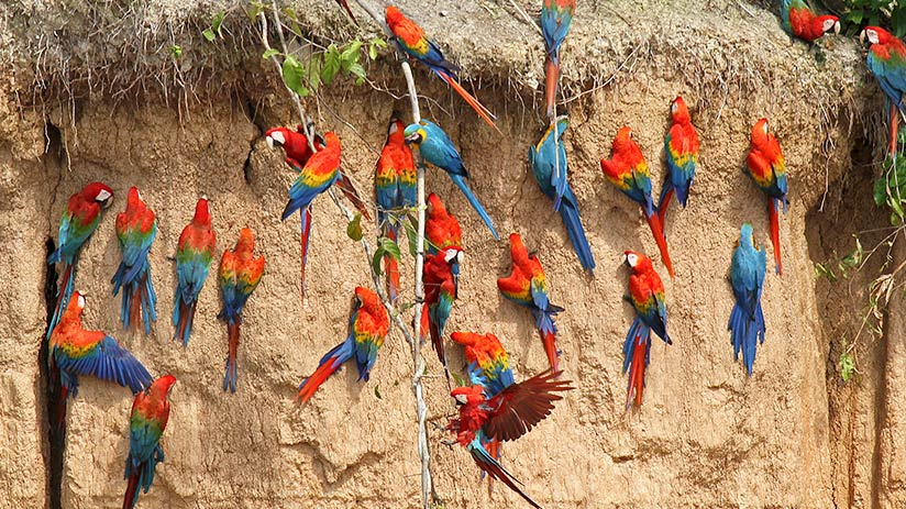 bird watching in Peru