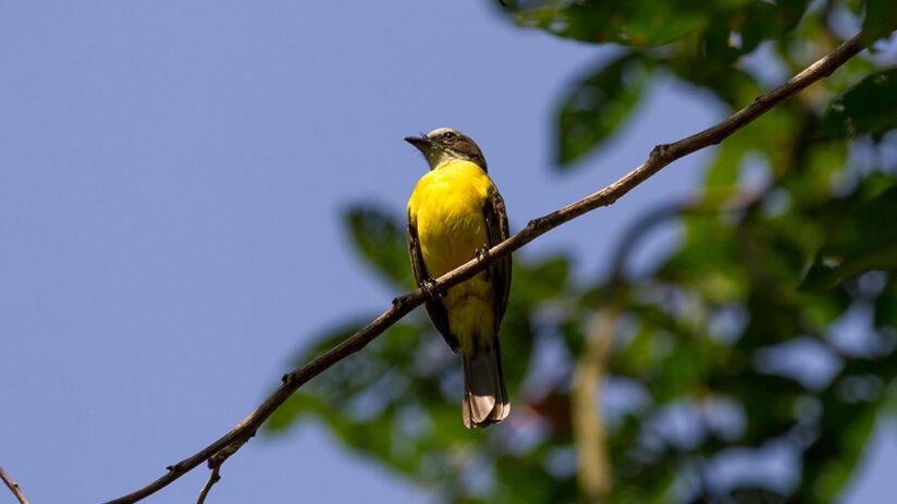 where to enjoy bird watching in peru