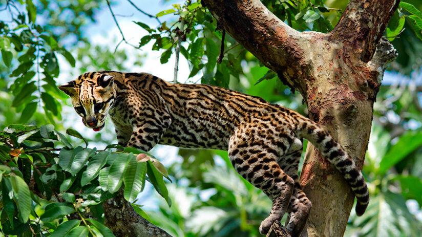 amazon rainforest variety flora fauna