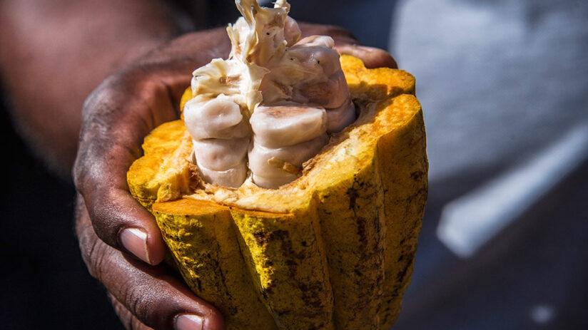history of peruvian chocolate