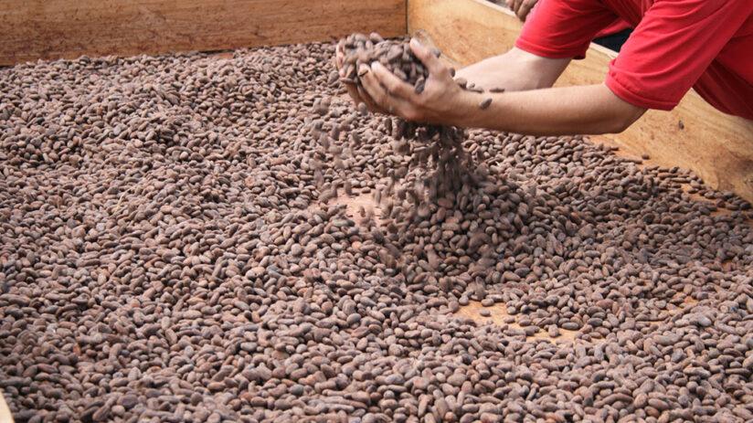 peruvian chocolate production