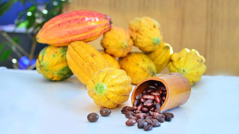 types of peruvian chocolate