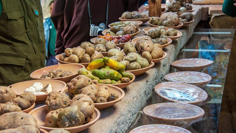 variety of peruvian potatoes