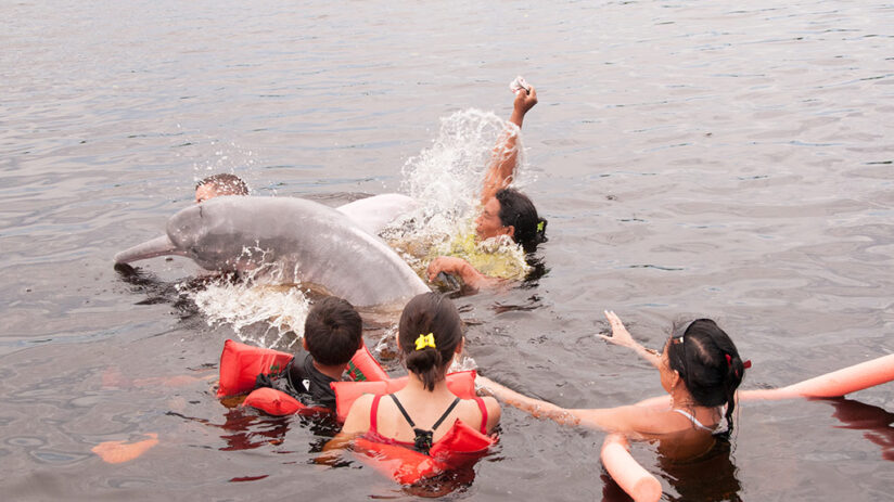 where to find pink river dolphin