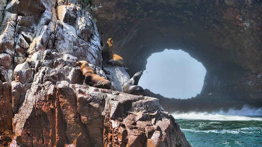 things to do in peru ballestas islands