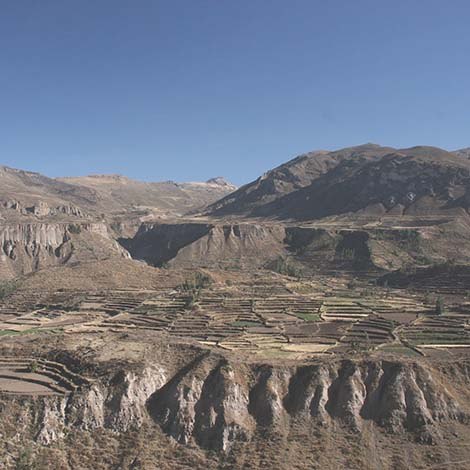 Gaze at ancient terraces colca canyon
