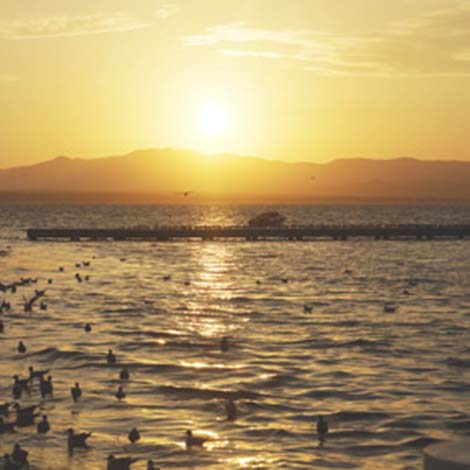 Enjoy the Water in Paracas