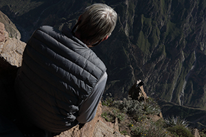 Condor resting in the Colca Canyon