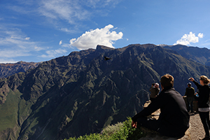 Tourist watching the flight of the condor in the colca canyon