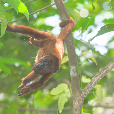 luxury tambopata jungle tour